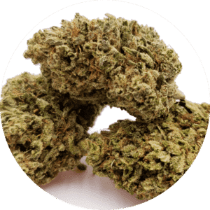 Best Hemp Buds Online