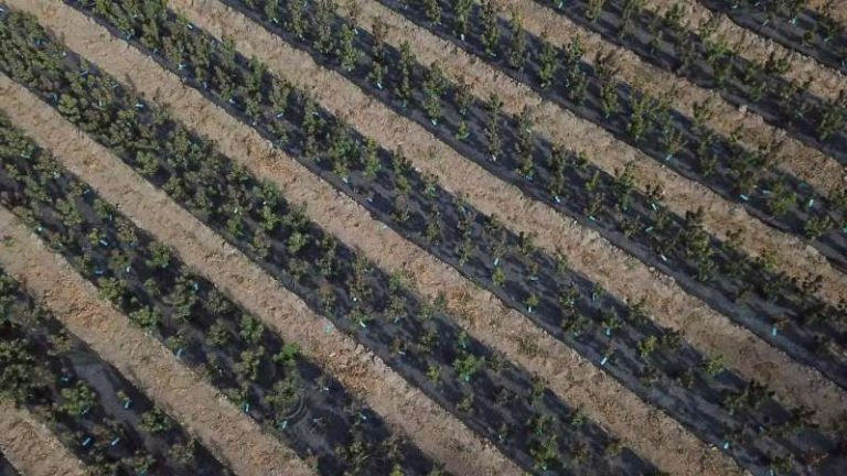 Croptober Is Going Up In Smoke Amid Wildfires: Cannabis Weekly
