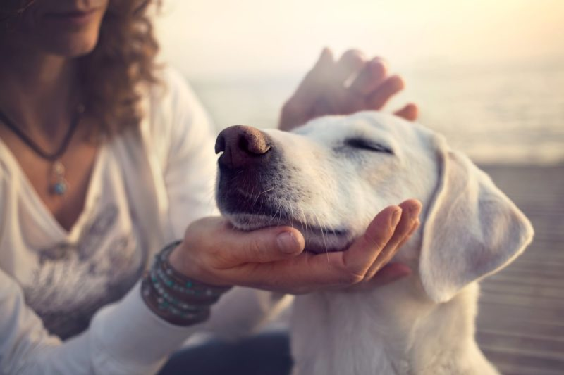 Are CBD Oils Safe for My Pets?