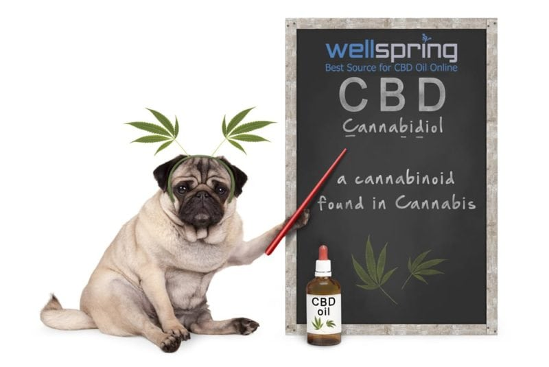 CBD Products and Drug Tests: What You Need to Know