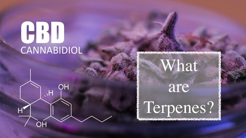 Terpene Time: Everything You Need to Know About CBD Terpenes