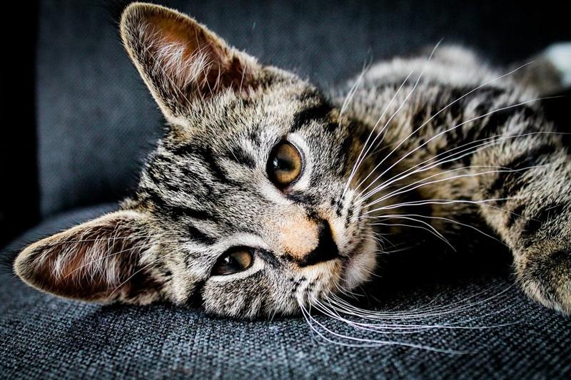 9 great cbd cat treats
